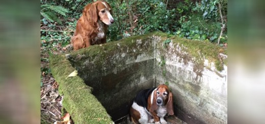 Dog stands guard for week protecting trapped friend-media-1