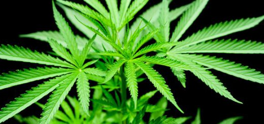 Tennessee, Colorado officers meet to talk about legalizing marijuana